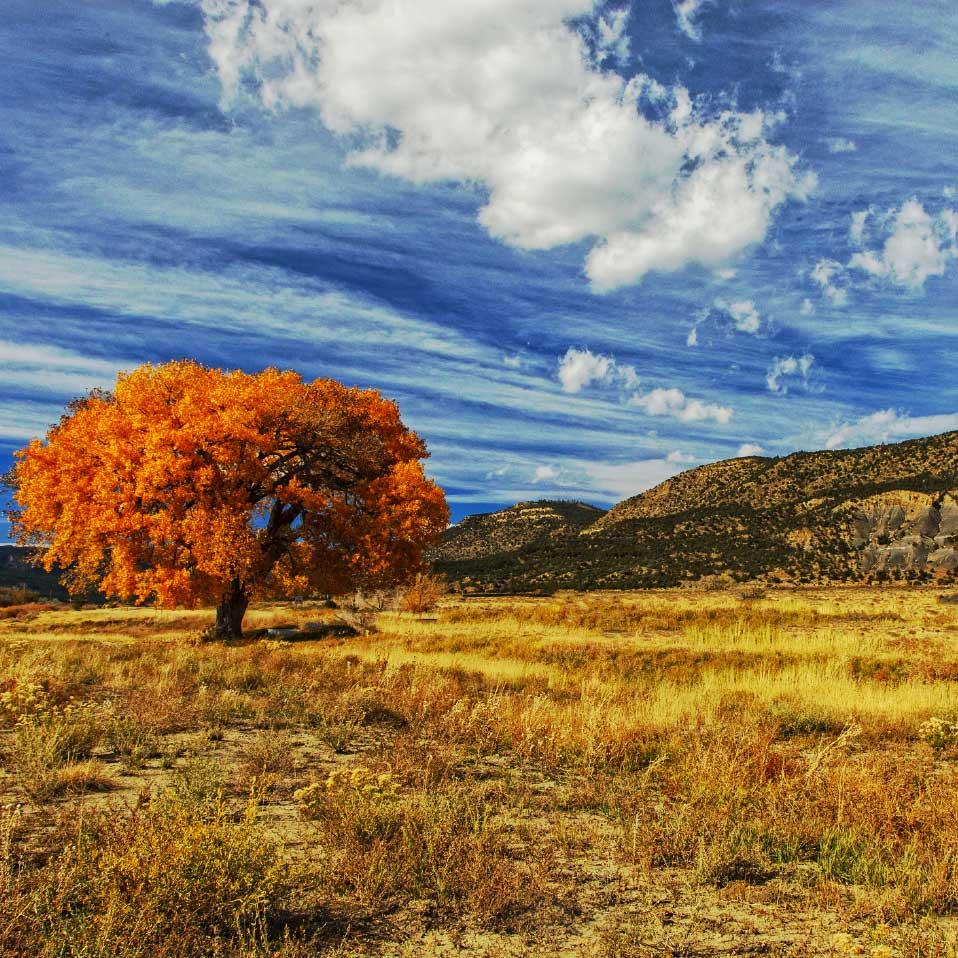 Taos New Mexico Autumn Leaves
